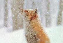 Beautiful WINTER mix / by Betty Clark