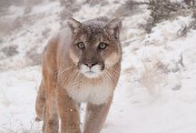 Animals of The Magnificent Outdoors / by Shannon Martin