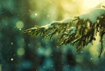 Wintertime / by Judit Cseri