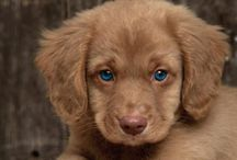 cute animals mostly dogs / by Janice Kanar
