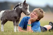 Miniature Horses / by janis melton