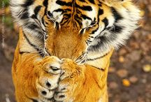 cute animals / by Terri Zink