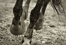 Equine Athletes / by Devin Kelly