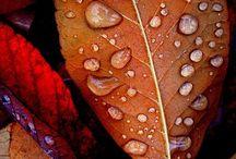 Magical Autumn / by Angela Huddleston