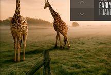 App* UI / by Craig Brimm