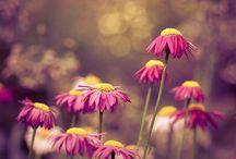 flowers / by Tammi Johnson Legassey
