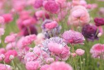 Flowers / by Stephanie Rees Brown