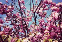 Paris in Springtime / by Choix