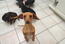 dachshund-land / by Leonore Proue