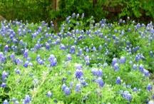 Texas / by HCPL Brain Train