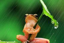 Frogs & Turtles / by Susan Lantz