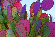 CACTI  AND SUCCULENTS / by Jean Carnaggio