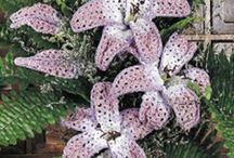 CROCHET KRAZY~Embellishments~Flowers / by Donna Medley
