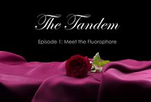 The Tandem / The Tandem is a new animated show depicting the journey of PE (Phycoerythrin) to find a new tandem partner.  He will ultimately select one out of ten possible contestants.  Viewers will be allowed to vote for their favorites each week.   / by BioLegend