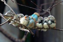 Birds of a feather / by Sarah Gimbel