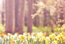Spring. / by Madison Allen