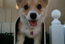 Puppies / by Lauren Fox