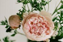 Lovely Flowers / by Phillipa Tonkin