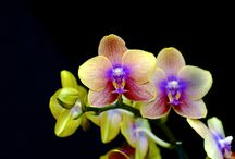 Orchids..My Fave / by Cleopatra♔ Huff