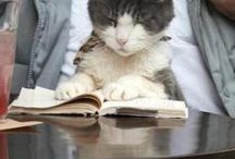 Paws for Reading Resources / Information to support a reading program with animal tutors. Included are photos of reading times. / by Handley Regional Library
