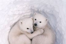 Animals / by Patty Lakkis