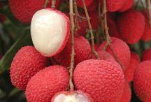 Refreshing Fruits / by Ve Kainama