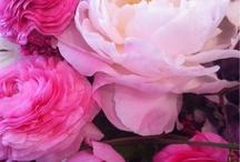 Fleurs / by Antoinette Johnston