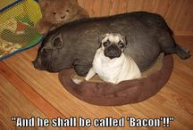 Pugs, prepare for tripping if you own one!! / by Elizabeth Munday