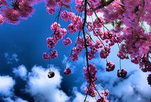 For Spring & Resurrection / by Karen Swanger