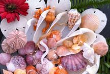 Shell Art / Beautiful Shell Creations / by Peggy Bour