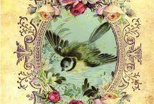 ♥ BIRDS ♥ / by Marilyn Martin