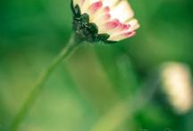 flowers  / by Simo Maio