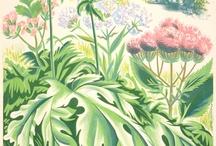 Botanical / by Shelagh Morrison