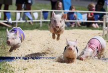 Pigs make me smile :-) / by Cathy Holt