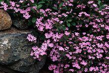 Garden / by Jess - Frugal with a Flourish