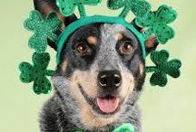St. Patty's Day Dogs / by DogVacay