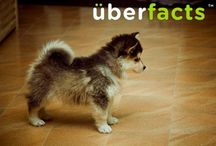 Puppies :) / by Jocelyn Batres