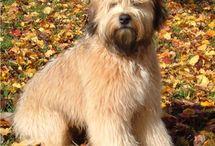 Teach Me How to Doggie / by Mary Hazuka