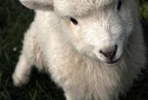 sheep/yarn / by Wendy Pinne