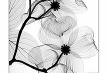 Illustration - Motif - Zentangle - Doodle / by ElJiO .