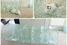 DIY: Pet / DIY idea's to make for the dog and cats. / by Rhonda Gillette
