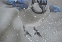 Beautiful Birds / by The Painted Dragonfly