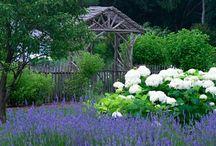 Glorious Gardens / by Dovecote Decor