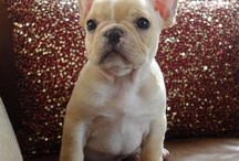 Frenchies / by Amber Lavergne