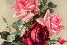 Rose Cottage / by Julie Futch