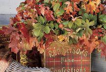 Fall Decor / by SutherlandsDIY