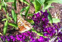 My joycems.com blog photos / by Joyce Sullivan