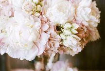 Flowers / by Bailey Longhofer