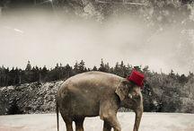 Elephants / by Courtney Waye