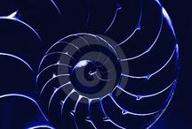 Nautilus / by nl c